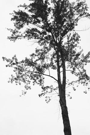 a dark tree image 版權商用圖片