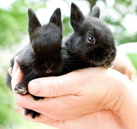 black bunnies Reklamní fotografie