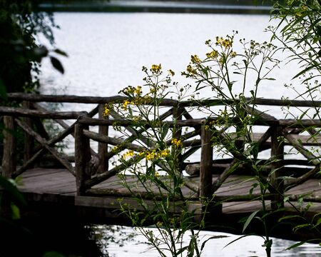 bridges over small lake Reklamní fotografie