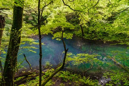 Japanese landscape-shirakami-juuniko-wakutsubo no ike-aomori Stock Photo