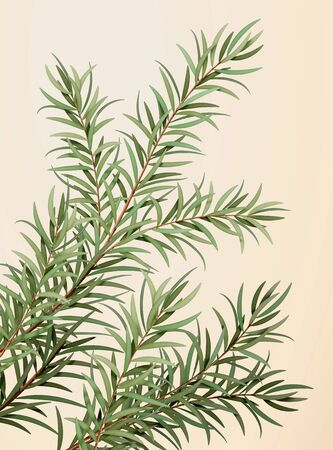 3d illustration of ethereal tea tree leaves, herb for medicine, cosmetics and essential oil, isolated on light yellow background