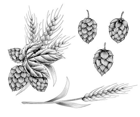 Engraving style hops and ears of wheat on white background