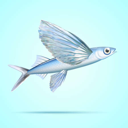 Silver flying fish isolated on light blue background 向量圖像