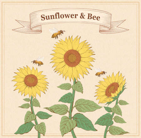 Retro style engraving of sunflowers and honeybees design on beige background
