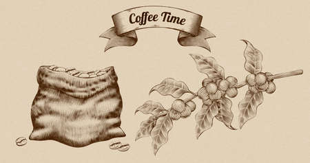 Coffee beans in burlap sack and fresh coffee fruit, engraving style