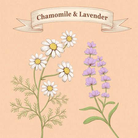Elegant engraving chamomile and lavender floral elements