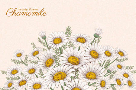 Engraving style Chamomile flowers on beige background 向量圖像