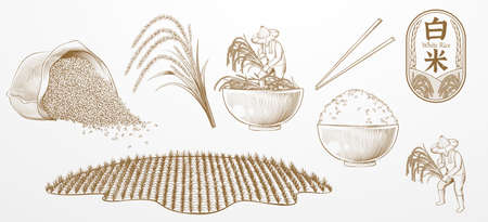 Rice farming elements designed in vintage engraving style, isolated on white background.