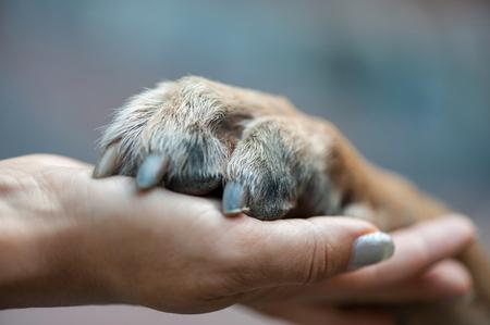 pata en mano femenina, mano humana y pata de perro Foto de archivo
