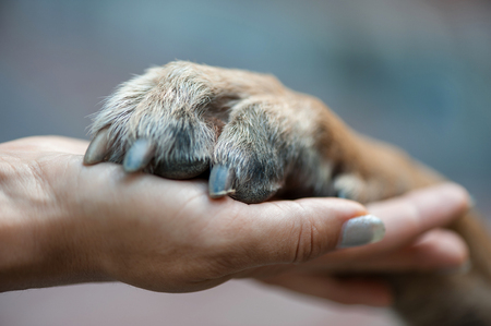 paw in female hand, human hand and dog paw