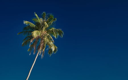 Perfect palm tree against a beautiful deep blue sky Reklamní fotografie
