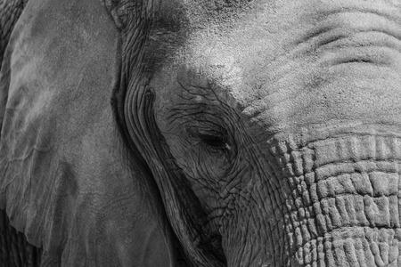 zoom: Zoom is an elephant