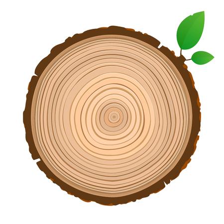 Icône de panneau de bois coupe transversale du tronc avec vecteur d'anneaux d'arbre
