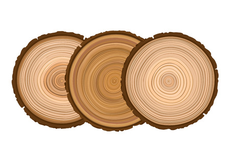 three texture of sawn wood brown object tree vector