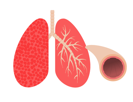 Lungs and bronchi.Vector illustration.