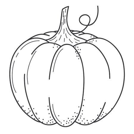 Pumkin scketch. Line art design.Isolated on white background.Vector illustration
