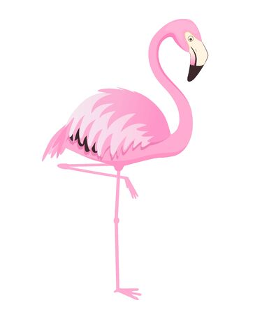 Pink flamingo stands on one leg. Vector illustration. Isolated on white background