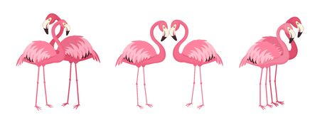 Loving couples of pink flamingos. Vector illustration. Isolated on white background
