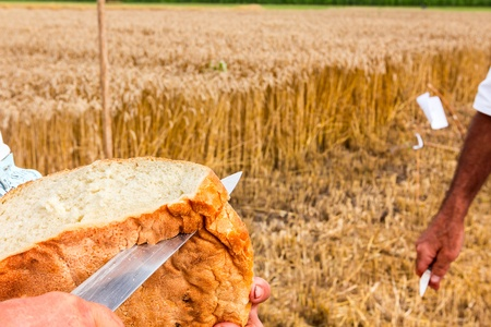 Slicing bran bread for traditional breakfast in the open at the time of harvest Stok Fotoğraf