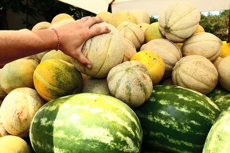 mingled: costumer taking melon from a pile of just harvested mixed watermelons and cantaloupe