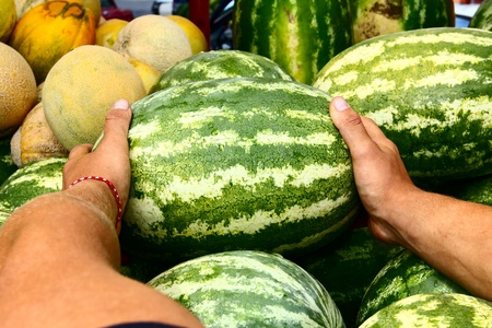 chose: costumer taking melon from a pile of just harvested mixed watermelons and cantaloupe