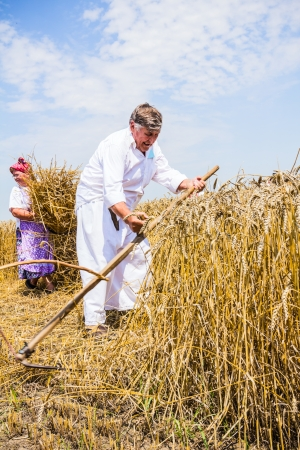 Farmers reaping on wheat field in the traditional old fashion way photo