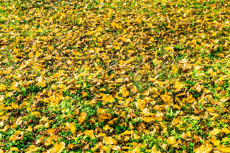 Colorful image of fallen autumn leaves perfect for seasonal use photo