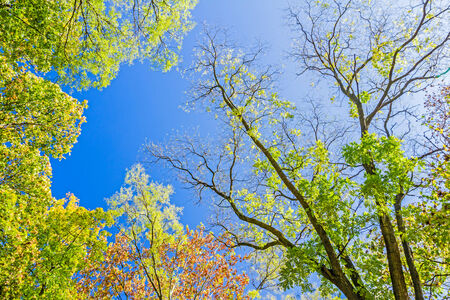 Colorful autumn treetops in autumn forest with blue sky and sun shining though trees. Stock Photo