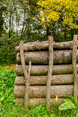 wood log: Logs of wood stacked and ready for selling or other usage