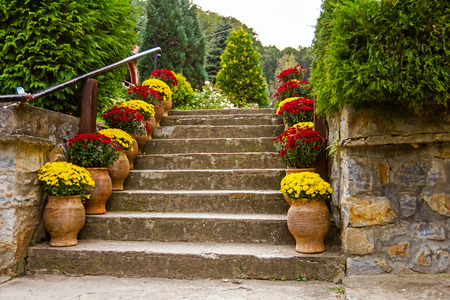 Potted flowers on a staircase in full bloom leading to a garden or patio photo