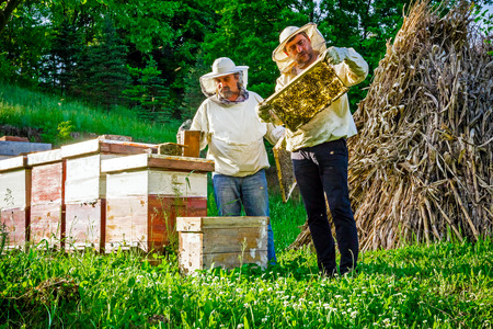 Two beekeepers are on spring checking of all details in their apiary. Zdjęcie Seryjne