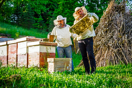 Two beekeepers are on spring checking of all details in their apiary. Stok Fotoğraf