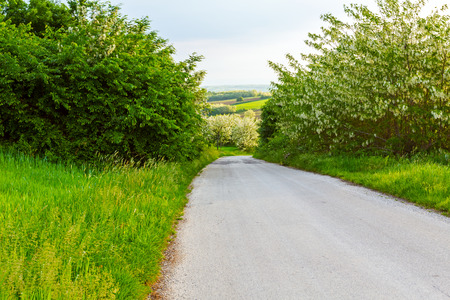downhill: Road is going downhill trough fresh spring vegetation Stock Photo