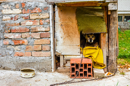 dwelling house: Dog is peaking from his wooden dwelling house