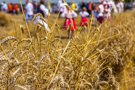 old times: People in old times are collected mowed wheat to make a big pile of many small sheaves.
