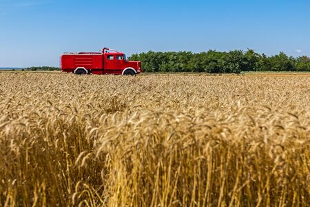antique fire truck: Red retro fire truck is parked in field with mature wheat.