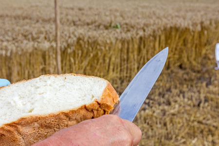 Male hands are slicing homemade bread at harvest time.