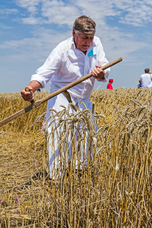 scythe: Farmer is reaping wheat manually with a scythe in the traditional rural way. Stock Photo