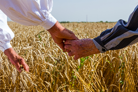 mature old generation: Two seniors are hold hands at wheat field.