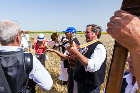 concertina: Musicians are play music before start reaping wheat manually in a traditional rural way. Muzlja, Vojvodina, Serbia, - July 05, 2014; XXXI Traditionally wheat harvest.