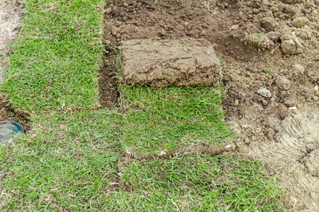 turf pile: Unrolling grass, applying turf rolls for a new lawn, work in progress. Stock Photo