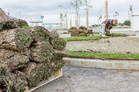 turf pile: Stack, heap of sod rolls on wooden pallet for installing new lawn, unrolling grass.