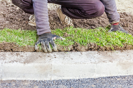 sod: Man is unrolling laying sod for new lawn at parking lot with roadside stones. Stock Photo