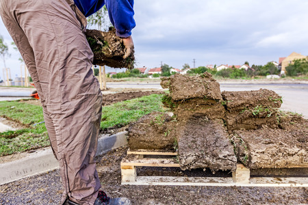 turf pile: Worker is taking sod of rolls from heap on wooden pallet for installing new lawn.