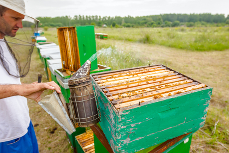 Beekeeper is controlling situation in bee colony with his bare hands taking out the honeycomb on wooden frame.