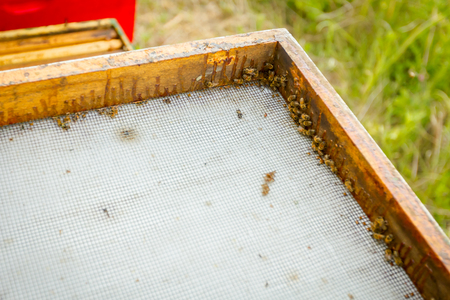Open cover of beehive with metal mesh and wooden frame. Stock Photo