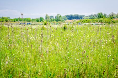 Colorful meadow with various herbs on sunny day. Row of beehives is placed in background.