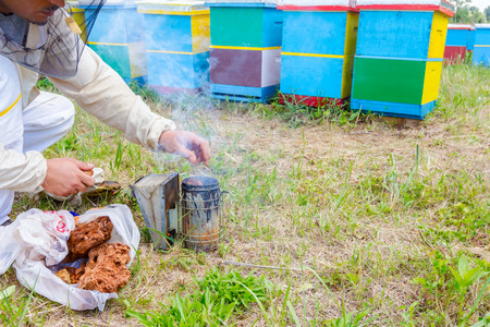 Beekeeper is filling, preparing with dry wood in bee smoker. Stock Photo