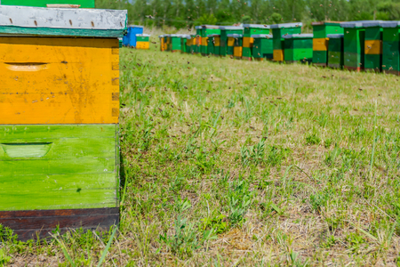 Wooden colorful beehives in a row are placed on a meadow.