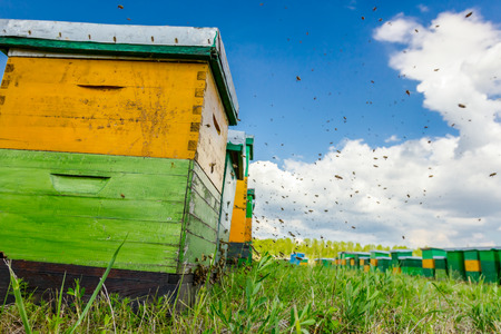 Low angle view on wooden colorful beehives in a row are placed on a meadow.